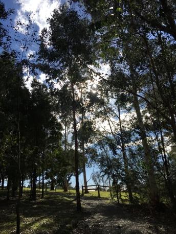 yarra trees